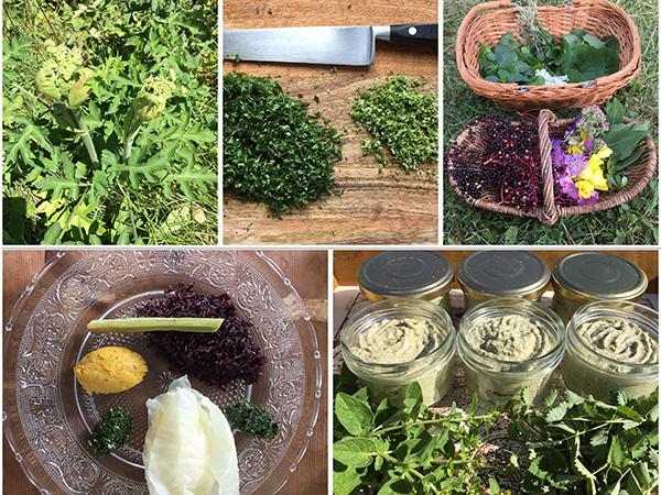 Cueillette et cuisine Atelier Plantes sauvages comestibles